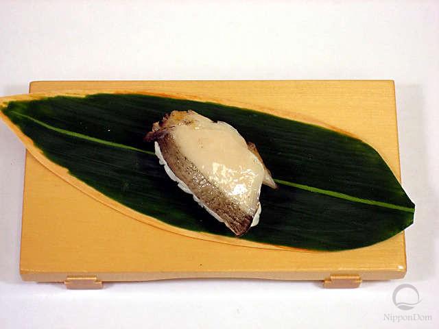 Abalone-1