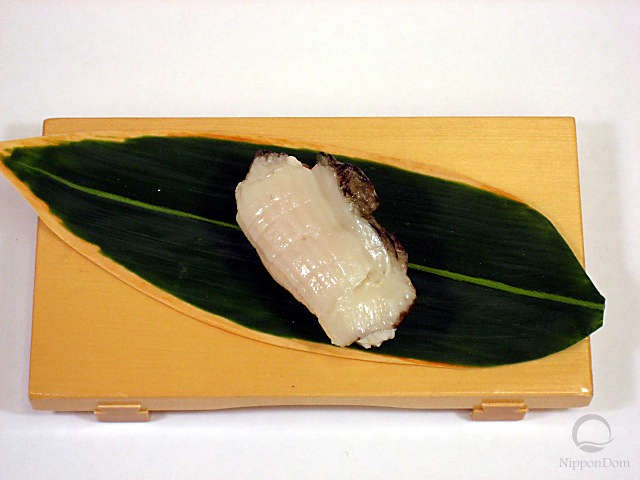Abalone-4