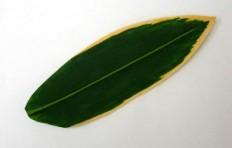 Макет листа полосатого бамбука (19 см)