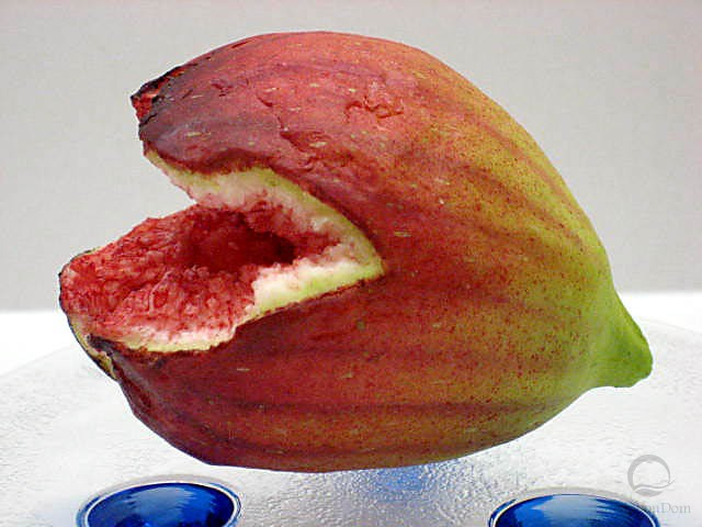 Fig (cracked)