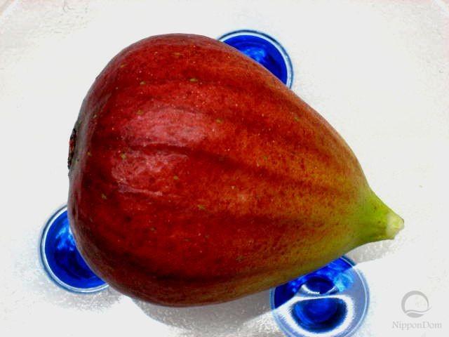 Fig (round)