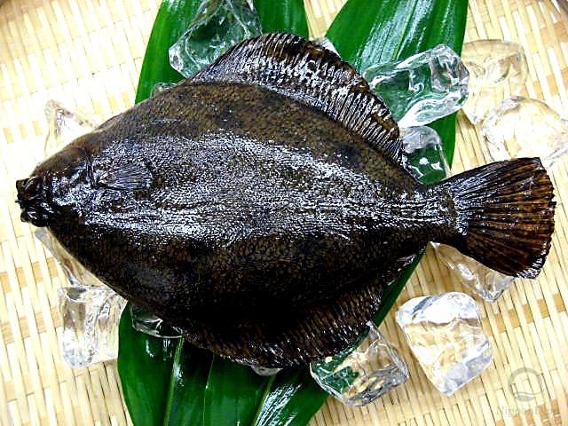 Flounder (24.5 cm)