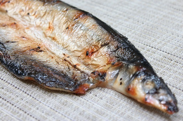 Grilled Pacific saury-3