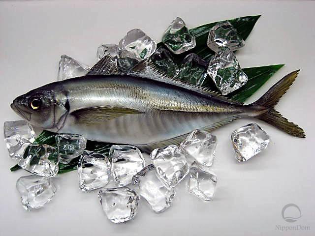 Horse mackerel (34.5 cm)-1