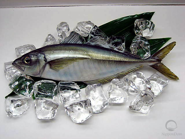 Horse mackerel (31 cm)-2