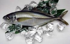 Horse mackerel (34.5 cm)-2