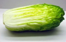 Chinese cabbage (125/235/80mm)