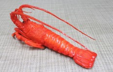 Lobster (270×105 mm)