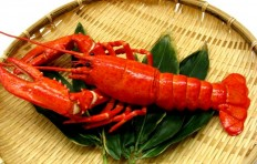 Lobster (21 cm)