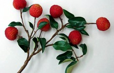 Lychee branch (large)