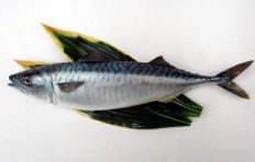 Mackerel (41 cm)