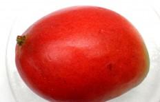 Муляж мексиканского манго (110/ 80 мм)