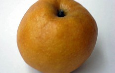 Pear-apple (Nashi)-1
