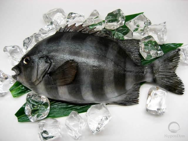 Parrotfish (31 cm)-1