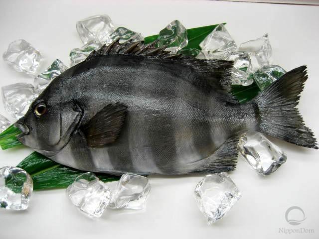 Parrotfish (31 cm)-2