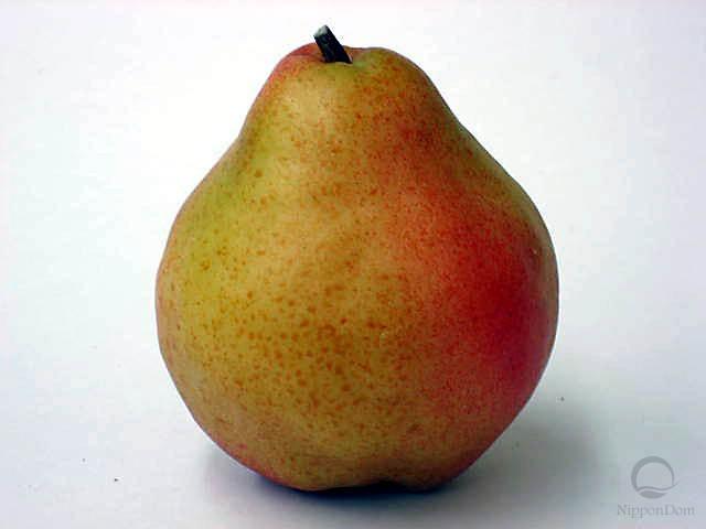 Pear-4