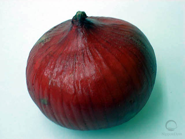 Red onion (95/88mm)