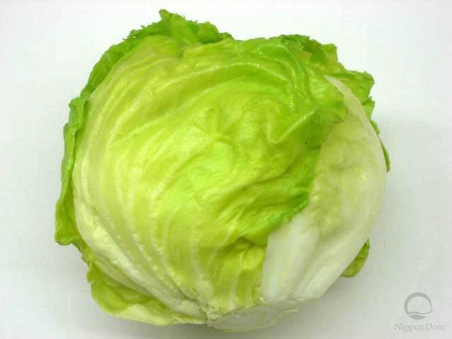 Lettuce (140/120mm)