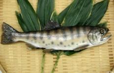 Salmon (29 cm)-1