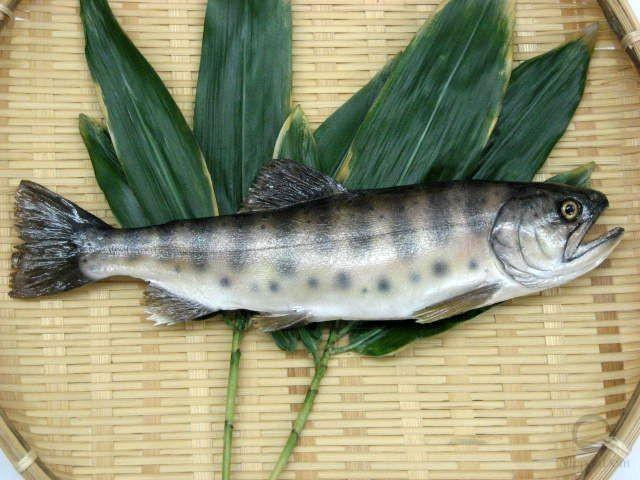 Salmon (29 cm)-2