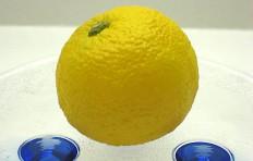 Small lemon-1