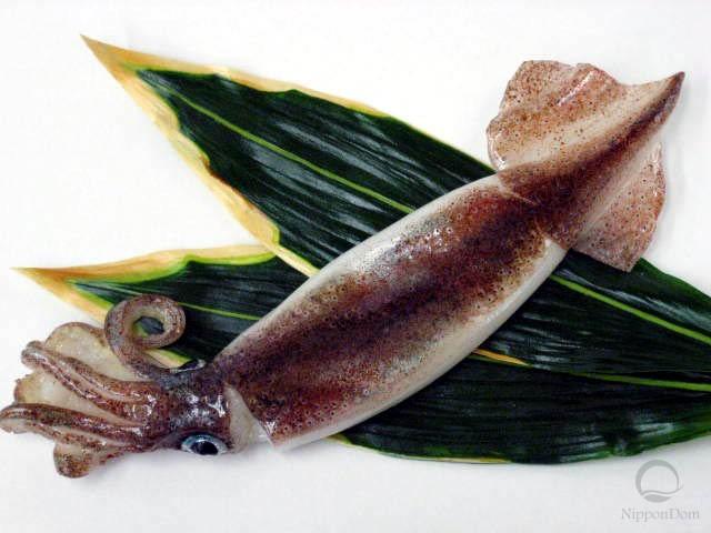 Squid (31 cm)