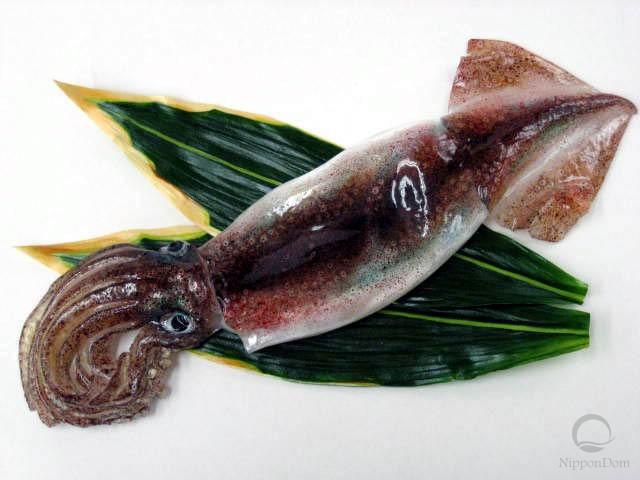 Squid (37 cm)