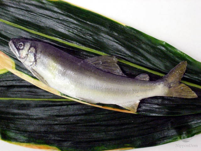Sweetfish (16.5 cm)-1
