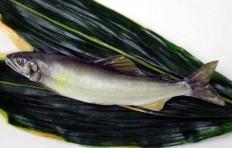 Sweetfish (18 cm)