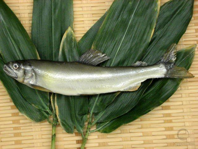 Sweetfish (21 cm)-1