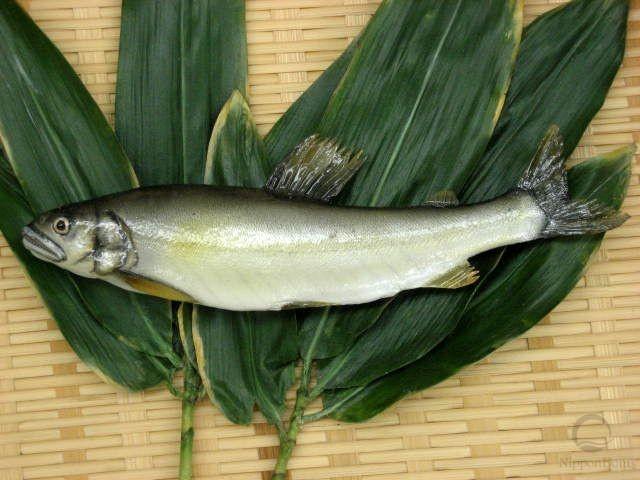 Sweetfish (21 cm)-2